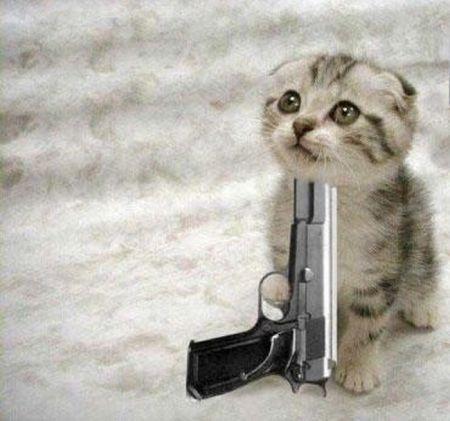 kitten_die1.jpg